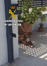 La Vilavella :: La Guàrdia Civil investiga a dues persones per un suposat delicte d'abandó d'animal domestique dies després de ser adoptat a La Vilavella