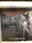 Torreblanca :: El PP reclama un tracte digne per a animals perduts en Torreblanca i sacrifici zero