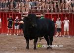 Castelló :: Preveuen que el 'bou al carrer' torne per a abans del Pilar